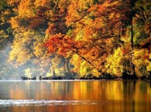The colors of fall.
